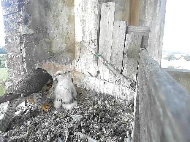 birdcam_12-5-2021-7-55.jpg