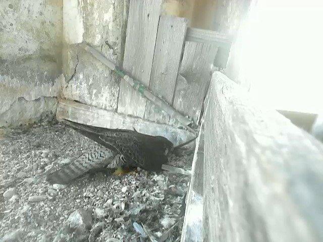birdcam_4-6-2021-14-30.jpg