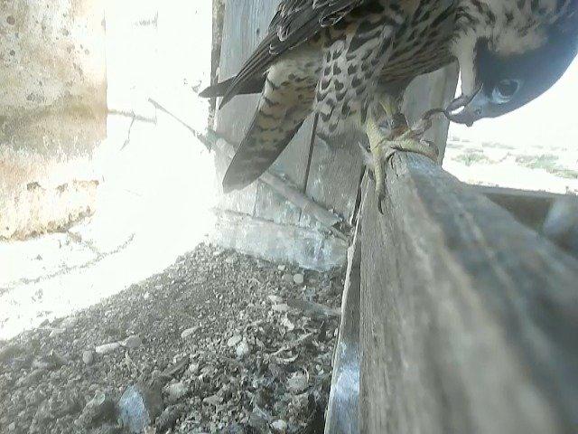 birdcam_8-6-2021-9-34.jpg