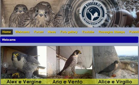 Online i nidi di Birdcam.it. Buone osservazioni!