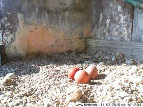 Aloa ha deposto il terzo uovo