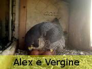 Alex e Vergine