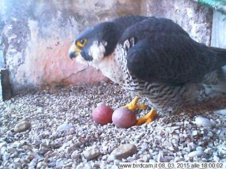 Uovo numero due di Aloa e Briciola!