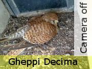 decima_off