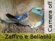 zaffiro_off