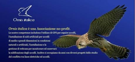 Ornis italica cerca studenti per ricerche