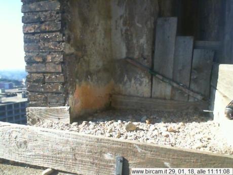 Di nuovo online il nido di Aloa e Briciola