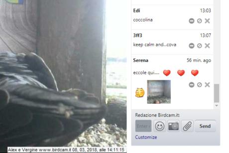 Inaugurata la chat di Birdcam.it