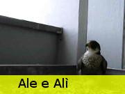 Ale ed Alì