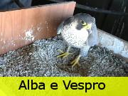 Alba e Vespro